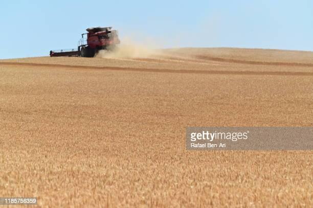 wheat combine harvesting grain production crop in kalbarri western australia - rafael ben ari stock-fotos und bilder