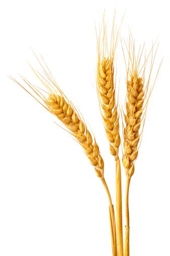 Wheat ears 174803517