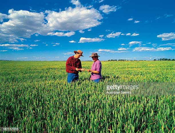 wheat farmers at beaufort, victoria, australia - victoria australia stock pictures, royalty-free photos & images