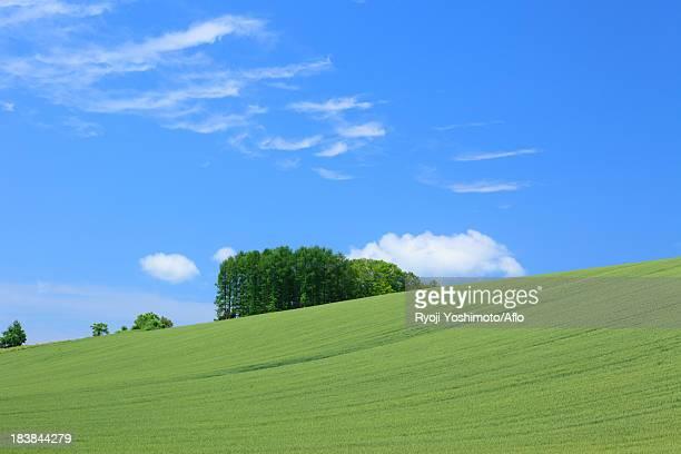 Wheat field and blue sky with clouds, Hokkaido
