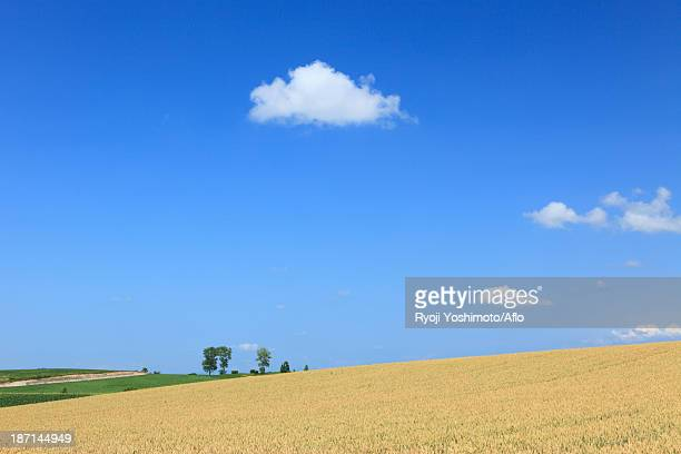 Wheat field and clouds, Hokkaido