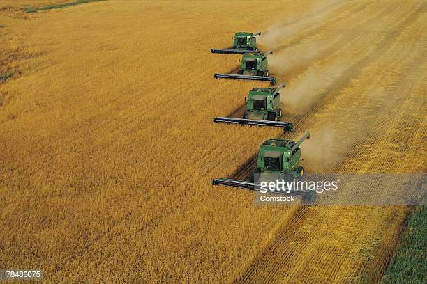 Wheat field being harvested
