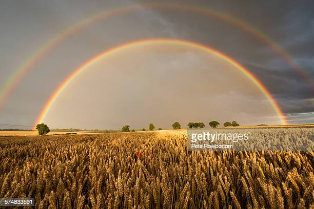 Wheat field double rainbow