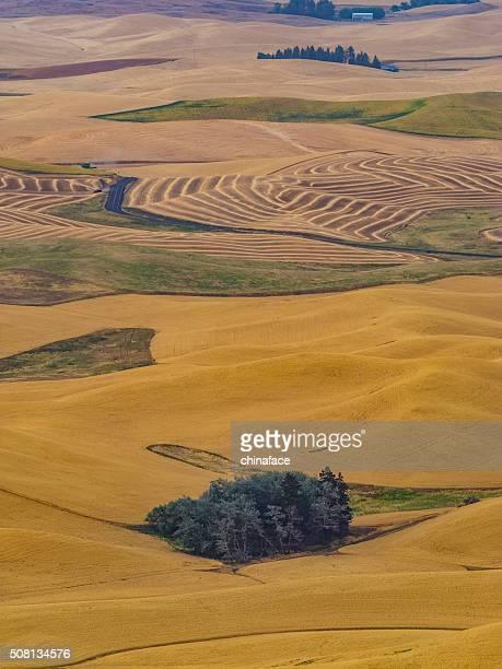 wheat field in autumn, Palouse, WA, USA