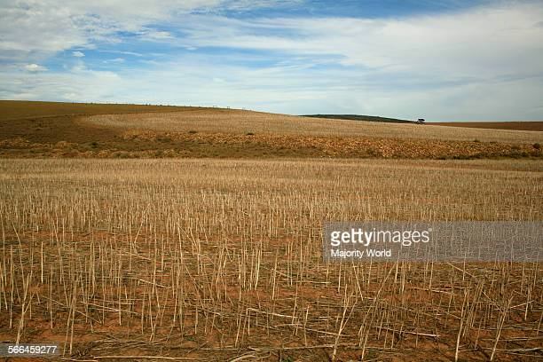 Wheat field in Overberg, South Africa,May 16, 2010