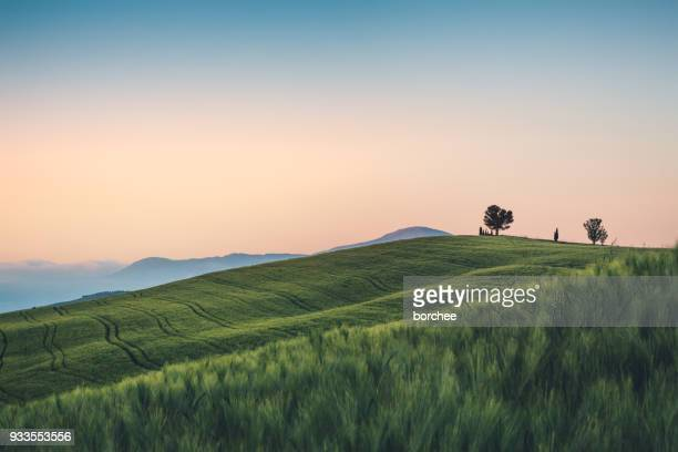 Weizen Feld In der Toskana