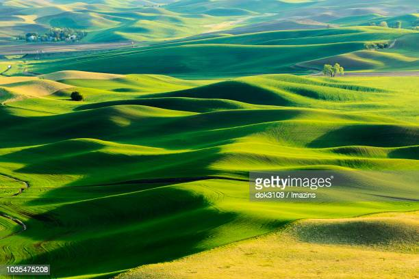wheat field of palouse city, seattle, washington - naturwunder stock-fotos und bilder