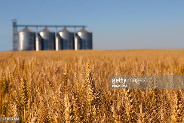 wheat field - silo stock photos and pictures