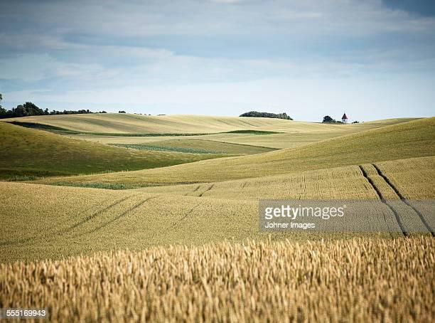 wheat field - champ photos et images de collection