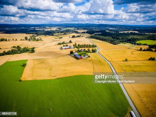 Wheat field, southern Norway