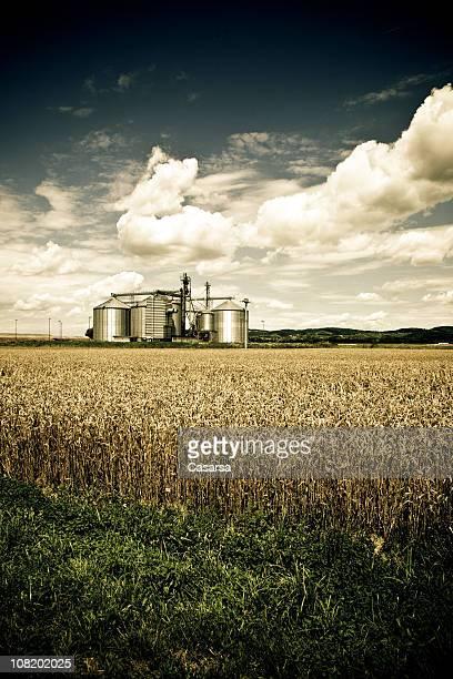 De stockage champ de blé avec fleur en arrière-plan