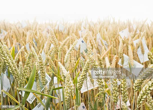 Wheat Field with money