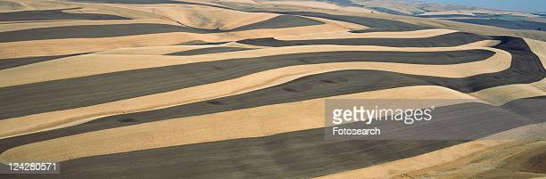 Wheat Fields and Contour Farming