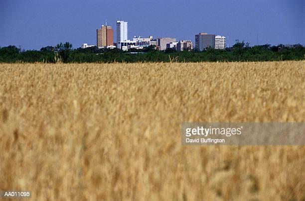 Wheat Fields and Midland, Texas