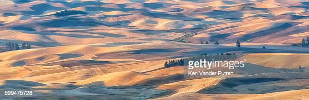 Wheat fields at dawn
