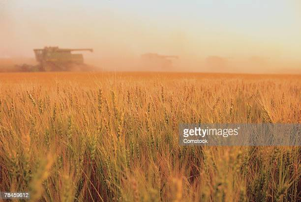 Wheat fields being harvested