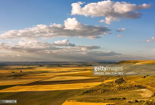 wheat fields in summer - castilla la mancha fotografías e imágenes de stock