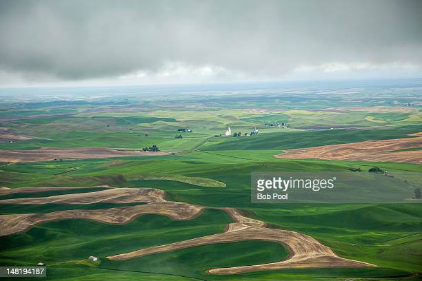 Wheat fields in the Palouse country