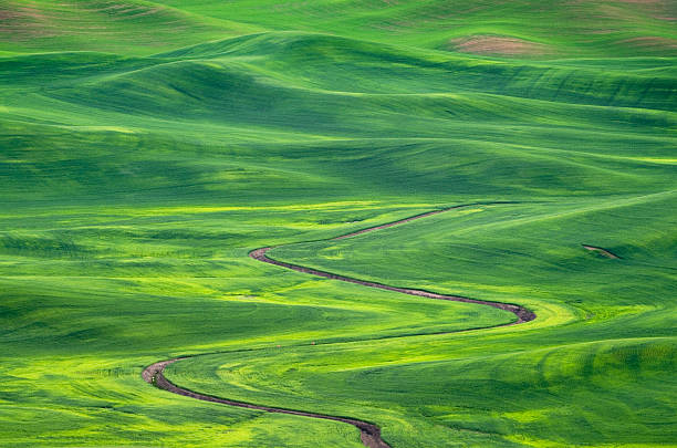Wheat Fields Palouse Washington Wall Art