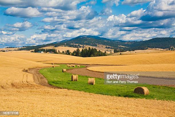 wheat fields with rolls of hay at harvest - washington state stock pictures, royalty-free photos & images
