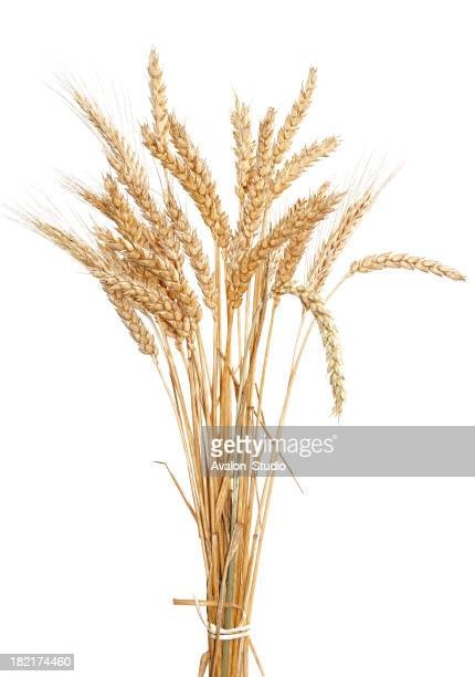 Wheat gold on a white background