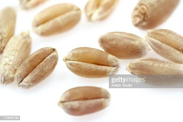 Wheat grain on a white background.