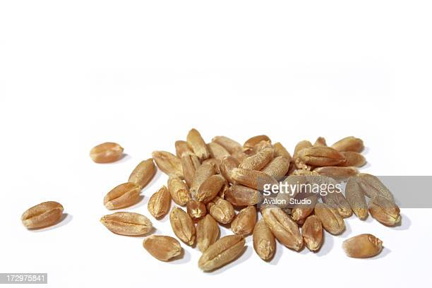 wheat grain on a white background - rye grain stock pictures, royalty-free photos & images