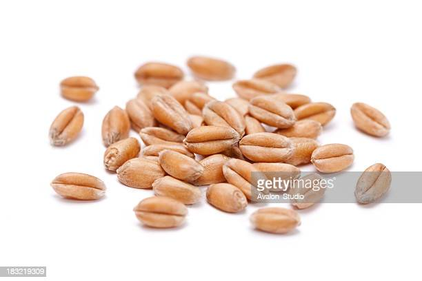 wheat  grain - cereal plant stock pictures, royalty-free photos & images