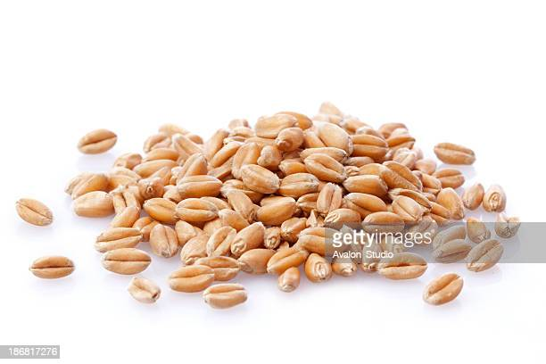 wheat grain - barley stock pictures, royalty-free photos & images