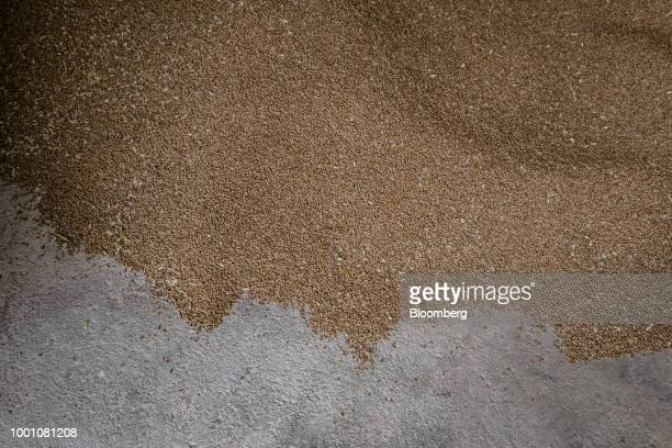 Wheat grain rests in a storage barn during harvest on a farm in La HauteMaison France on Tuesday July 17 2018 In France the EUs top grower too much...