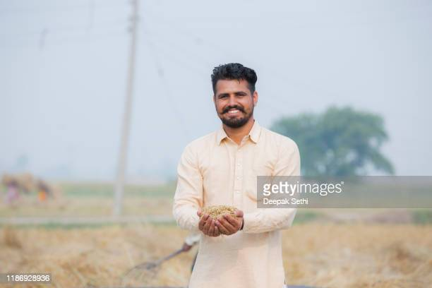 wheat grains in man hand stock photo - punjab india stock pictures, royalty-free photos & images