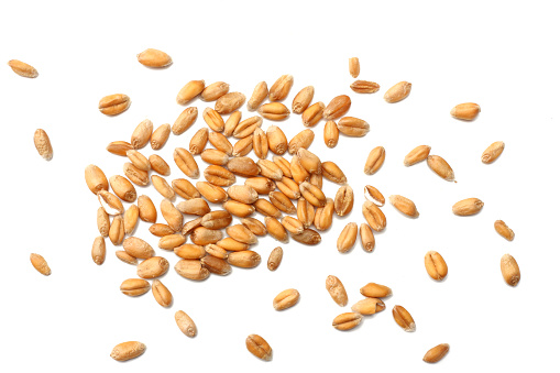 wheat grains isolated on white background. top view 911813402