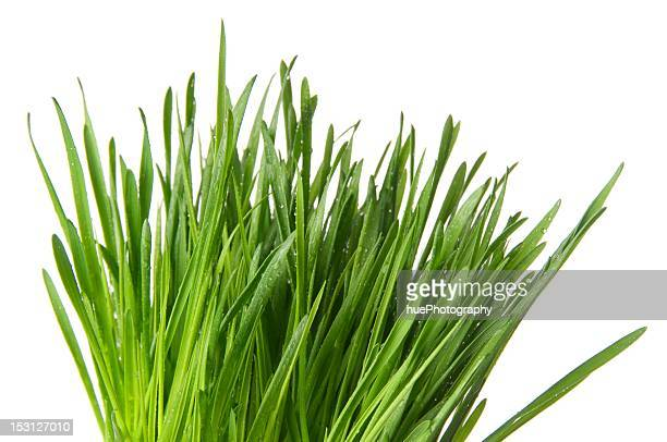 wheat grass - blade of grass stock pictures, royalty-free photos & images