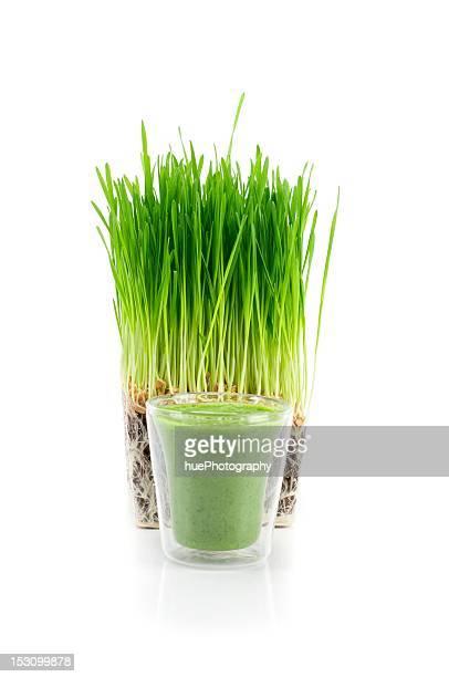 Weizen Gras Aufnahme