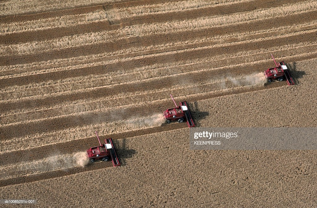 Wheat harvest being cut by red combines, aerial view : Foto stock