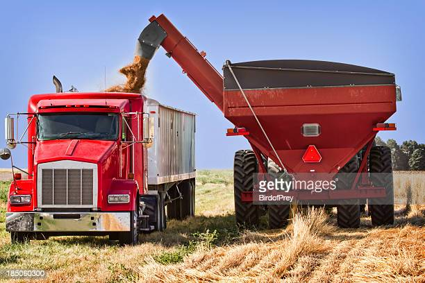 wheat harvest, being transfered grain cart to truck. - cereal plant stock pictures, royalty-free photos & images