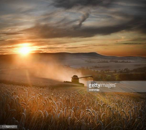 wheat harvest - tractor stock pictures, royalty-free photos & images