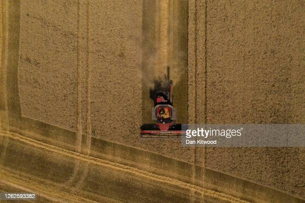 Wheat is harvested in fields for Street End Farms on July 29, 2020 in Canterbury, England. British wheat growers were expecting to cut the smallest...