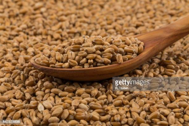 wheat on a spoon