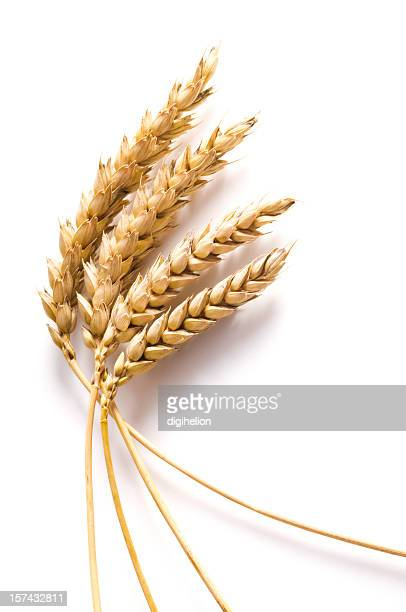 wheat on white background - close-up - wheat grain stock photos and pictures