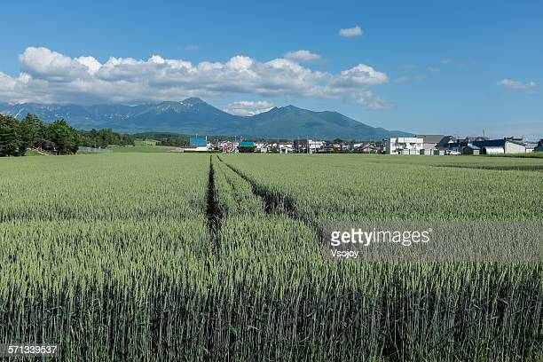 wheat paddock and mountains, kamifuranocho - vsojoy stock pictures, royalty-free photos & images