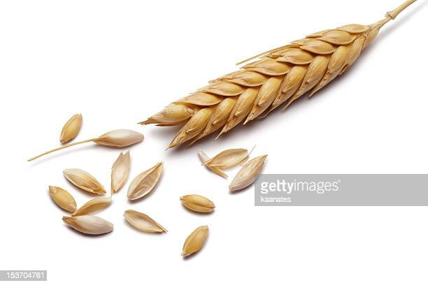 wheat - cereal plant stock pictures, royalty-free photos & images