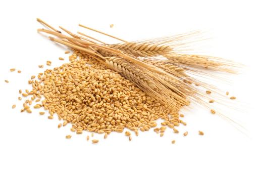 Wheat. 180697041