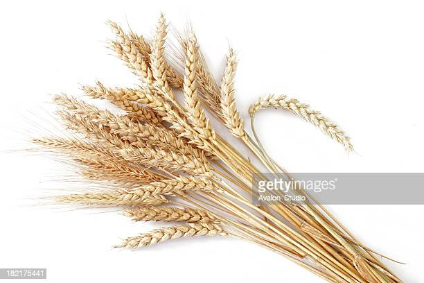 wheat - wheat stock pictures, royalty-free photos & images