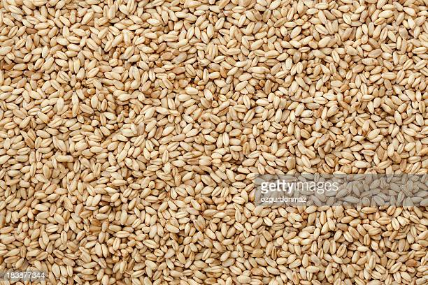Sfondo di chicchi di grano