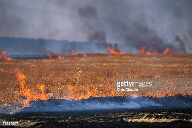 Wheat stubble burning