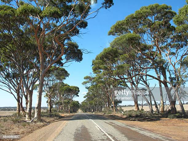 wheatbelt roads - jill harrison stock pictures, royalty-free photos & images