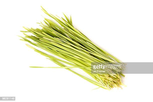 Wheatgrass Isolated on White Background