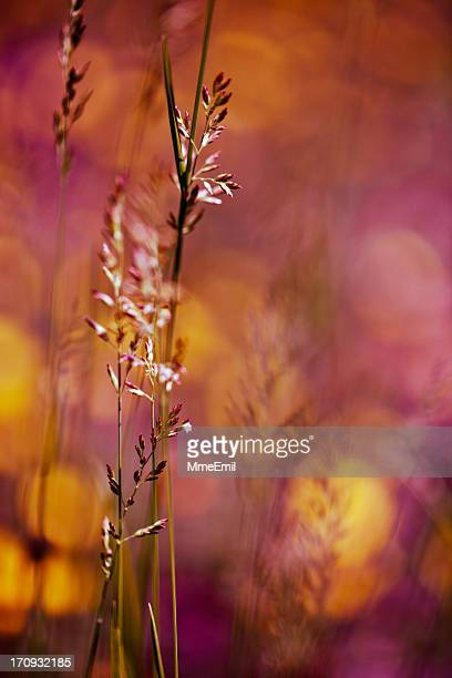 wheatgrass - saturated color stock pictures, royalty-free photos & images