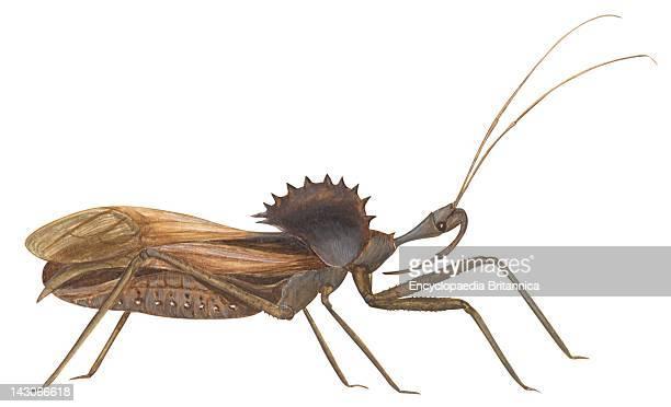 Wheel Bug Wheel Bug